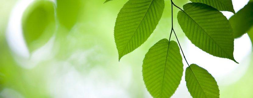 Las claves para comenzar tu colección de hojas de plantas